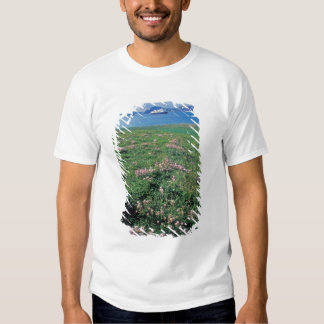 NA, USA, Alaska, Aleutian Island, Scenic with T-shirts
