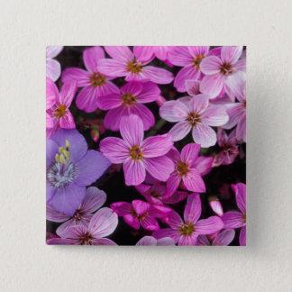 NA, USA, Alaska, Aleutian Islands, Wildflowers 15 Cm Square Badge