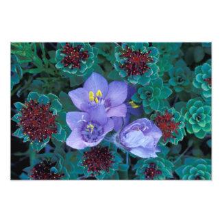 NA, USA, Alaska, Aleutian Islands, Wildflowers 2 Photo Print