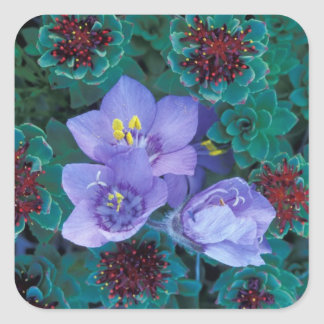 NA, USA, Alaska, Aleutian Islands, Wildflowers 2 Square Sticker