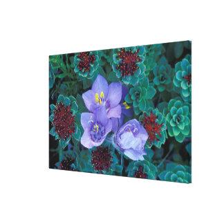 NA, USA, Alaska, Aleutian Islands, Wildflowers Canvas Print