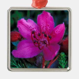 NA, USA, Alaska, Aleutian Islands, Wildflowers Christmas Ornament