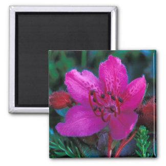 NA, USA, Alaska, Aleutian Islands, Wildflowers Square Magnet