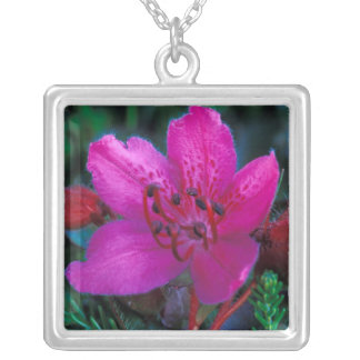 NA, USA, Alaska, Aleutian Islands, Wildflowers Square Pendant Necklace