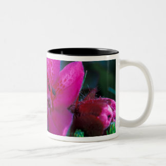 NA, USA, Alaska, Aleutian Islands, Wildflowers Two-Tone Coffee Mug