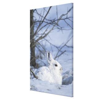 NA USA Alaska Arctic National Wildlife Canvas Print