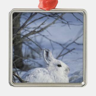 NA, USA, Alaska. Arctic National Wildlife Christmas Ornament