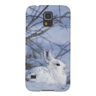 NA, USA, Alaska. Arctic National Wildlife Galaxy S5 Cover