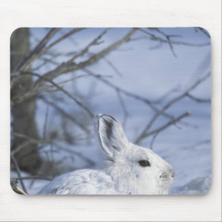 NA, USA, Alaska. Arctic National Wildlife Mouse Mat