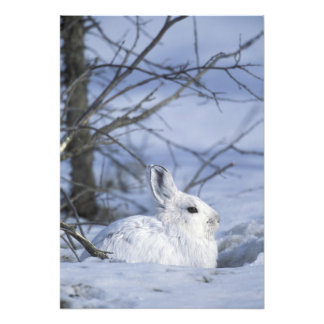NA, USA, Alaska. Arctic National Wildlife Photo Print