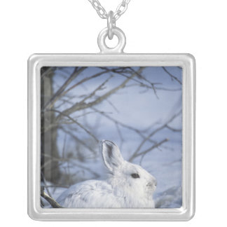 NA, USA, Alaska. Arctic National Wildlife Silver Plated Necklace