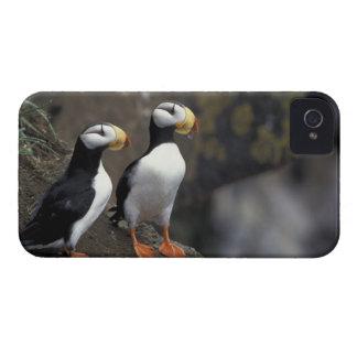 NA, USA, Alaska, Bering Sea, Pribilofs, St. 2 Case-Mate iPhone 4 Case