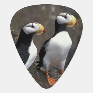 NA, USA, Alaska, Bering Sea, Pribilofs, St. 2 Guitar Pick