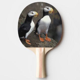 NA, USA, Alaska, Bering Sea, Pribilofs, St. 2 Ping Pong Paddle