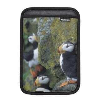 NA, USA, Alaska, Bering Sea, Pribilofs, St. iPad Mini Sleeve