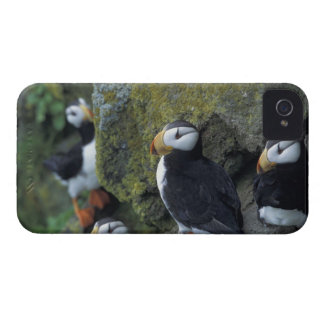 NA, USA, Alaska, Bering Sea, Pribilofs, St. iPhone 4 Case