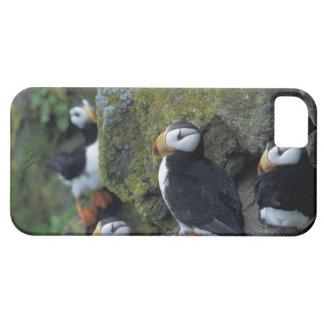 NA, USA, Alaska, Bering Sea, Pribilofs, St. iPhone 5 Cover