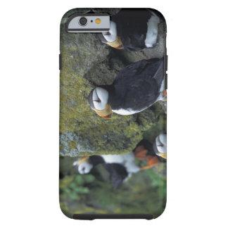 NA, USA, Alaska, Bering Sea, Pribilofs, St. Tough iPhone 6 Case