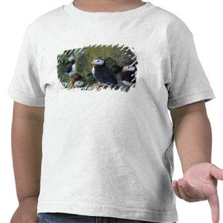 NA, USA, Alaska, Bering Sea, Pribilofs, St. Tee Shirt