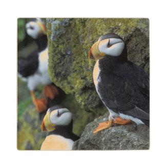 NA, USA, Alaska, Bering Sea, Pribilofs, St. Wood Coaster