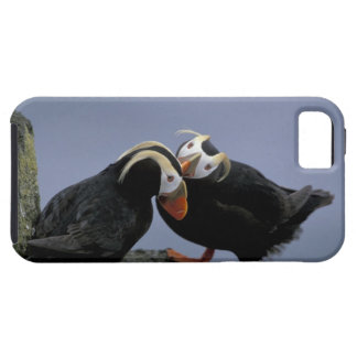 NA, USA, Alaska, Bering Sea, Pribilofs. Tufted iPhone 5 Case