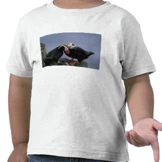 NA, USA, Alaska, Bering Sea, Pribilofs. Tufted T-shirts