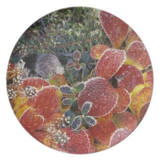 NA, USA, Alaska. Denali National Park. Bearberry 2 Plate