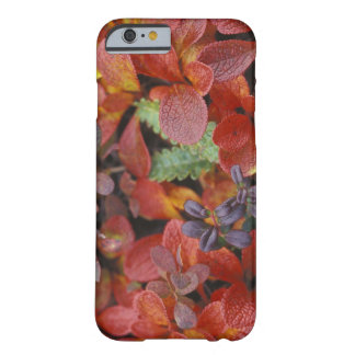 NA, USA, Alaska. Denali National Park. Bearberry Barely There iPhone 6 Case