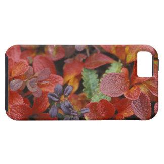 NA, USA, Alaska. Denali National Park. Bearberry iPhone 5 Cases