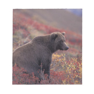 NA, USA, Alaska, Denali NP. A female grizzly Notepad