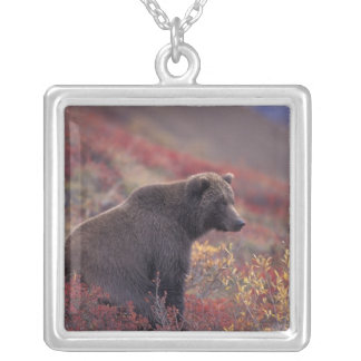 NA, USA, Alaska, Denali NP. A female grizzly Silver Plated Necklace