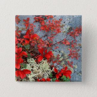 NA, USA, Alaska, Denali NP, Bear berry and 15 Cm Square Badge