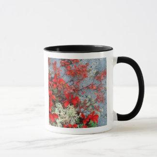 NA, USA, Alaska, Denali NP, Bear berry and Mug