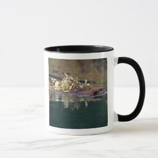 NA, USA, Alaska, Denali NP, Beaver collecting Mug