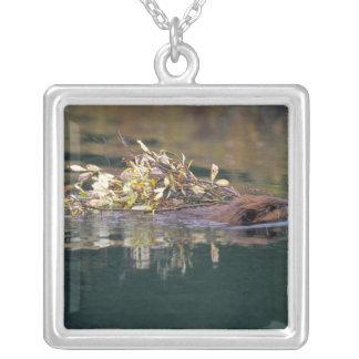 NA, USA, Alaska, Denali NP, Beaver collecting Silver Plated Necklace