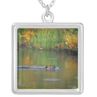 NA, USA, Alaska, Denali NP, Beaver in fall Silver Plated Necklace