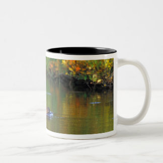 NA, USA, Alaska, Denali NP, Beaver in fall Two-Tone Coffee Mug