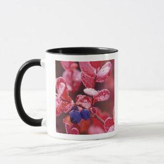 NA, USA, Alaska, Denali NP, Blue berries in Mug