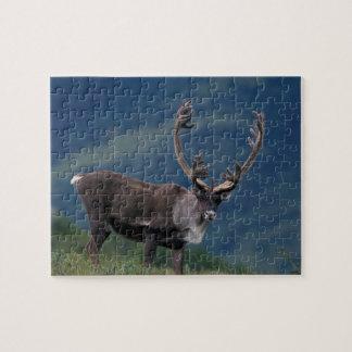 NA, USA, Alaska, Denali NP, Bull caribou 2 Jigsaw Puzzle