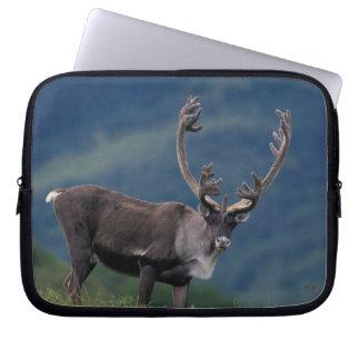 NA, USA, Alaska, Denali NP, Bull caribou 2 Laptop Sleeves