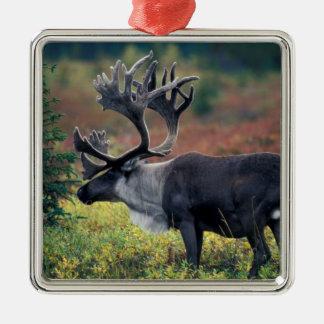 NA, USA, Alaska, Denali NP, Bull caribou 3 Christmas Ornament