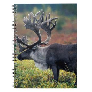NA, USA, Alaska, Denali NP, Bull caribou 3 Notebooks