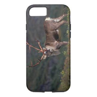 NA, USA, Alaska, Denali NP, Bull caribou iPhone 8/7 Case