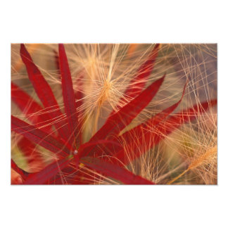 NA, USA, Alaska, Denali NP, Fireweed and wild Photographic Print