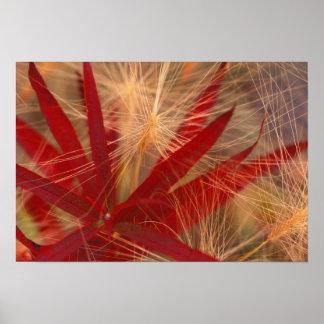 NA, USA, Alaska, Denali NP, Fireweed and wild Poster