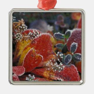 NA, USA, Alaska, Denali NP Frosted, fall-colored Christmas Ornament
