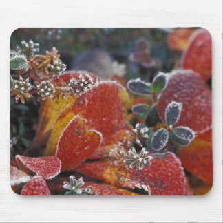 NA, USA, Alaska, Denali NP Frosted, fall-colored Mouse Pad