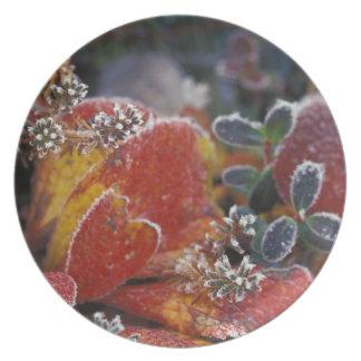 NA, USA, Alaska, Denali NP Frosted, fall-colored Party Plates