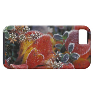 NA, USA, Alaska, Denali NP Frosted, fall-coloured iPhone 5 Cases