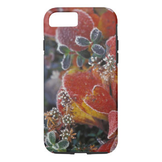 NA, USA, Alaska, Denali NP Frosted, fall-coloured iPhone 8/7 Case